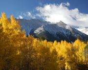 Collegiate Peaks Framed Prints - Collegiate Peaks in Autumn Framed Print by Rhonda Van Pelt