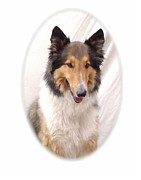 Collie Digital Art Posters - Collie 121 Poster by Larry Matthews
