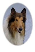 Collie Digital Art Posters - Collie 422 Poster by Larry Matthews
