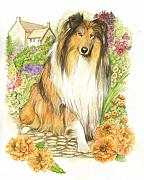 Collie Framed Prints - Collie Dog Framed Print by Morgan Fitzsimons