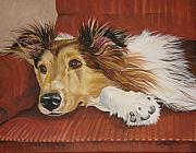 Collie On A Couch Print by Laura Bolle