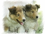 Collie Digital Art Posters - Collie Pups Poster by Maxine Bochnia