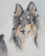 Collie Painting Framed Prints - Collie Framed Print by Rachel Dutton