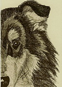 Collie Drawings Posters - Collie Poster by Susan Herber