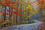 Mountain Road Prints - Color Along Curvy Raod Print by Alan Lenk