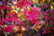 Fall Photo Prints - Color Print by Chad Dutson