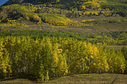 Aspen Grove Prints - Color Change Print by Timothy Johnson