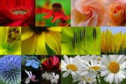 Flower Artwork Prints - Color Emotion Print by Juergen Roth