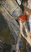 Fine Art Photography Originals - Color In The Rocks by James Steele