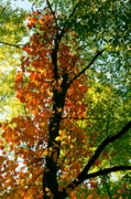 Autumn Landscape Digital Art - Color of Autumn by Amanda Kiplinger