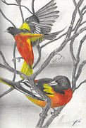 Perched Mixed Media Posters - Color of Orioles Poster by Kyle Kitchen