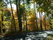 Scenic Drive Originals - Color of Seasons  by Brian  Maloney