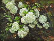 White Flowering Bush Paintings - Color of White by Katherine Tucker