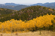 Fall Photographs Posters - Colorado Aspen View Looking Out Poster by James Bo Insogna