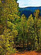 Rocky Mountains Drawings Prints - Colorado Aspens Print by Howard Perry