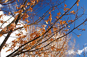 Autumn Leaf Photos - Colorado Autumn Fall Leaf Scenics by ELITE IMAGE photography By Chad McDermott