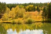 Striking-photography.com Photo Posters - Colorado Autumn Reflections Poster by James Bo Insogna
