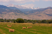 Striking Photography Prints - Colorado Hay  Print by James Bo Insogna