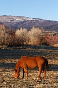 Ranch Prints - Colorado Horse Ranch at Sunset near the Rocky Mountains Print by ELITE IMAGE photography By Chad McDermott