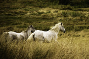 Autumn Scene Photos - Colorado Horses by Mary Hockenbery