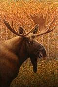 Colorado Moose Print by James W Johnson
