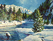 Nature Scene Paintings - Colorado Pines by David Lloyd Glover