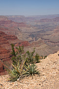 Colorado River Grand Canyon National Park Arizona Usa Print by Audrey Campion