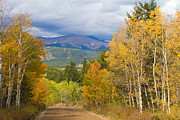 Autumn Photography Prints Posters - Colorado Rocky Mountain Autumn Scenic Drive Poster by James Bo Insogna