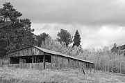 Decorative Prints - Colorado Rustic Autumn High Country Barn BW Print by James Bo Insogna