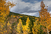 Roiling Prints - Colorado Squaw Pass Autumn Print by Michael Kirsh