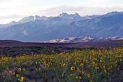 Sand Dunes National Park Prints - Colorado Style Landscape Sunflowers on the Sangre de Cristos Print by Scotts Scapes