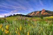 Cloudy Skies Prints - Colorado Wildflowers Print by Scott Mahon