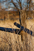 Ranch Prints - Colorado Wooden Fence Post with Barbed Wire Scenics Print by ELITE IMAGE photography By Chad McDermott