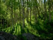 Leslie Rhoades - Colorado Yellows and Greens