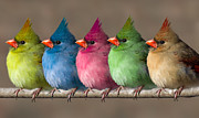 Colored Chicks Print by John Haldane
