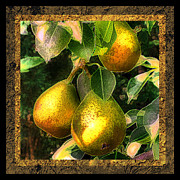 Pear Art Digital Art Posters - Colored Pears Poster by Sari Sauls