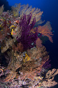 Whip Posters - Colorful Assorted Sea Fans And Soft Poster by Steve Jones