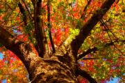 Autumn Prints Prints - Colorful Autumn Abstract Print by James Bo Insogna