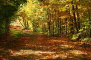 Leaf Collage Prints - Colorful autumn afternoon Print by Sandra Cunningham