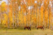 Horse Images Prints - Colorful Autumn High Country Landscape Print by James Bo Insogna