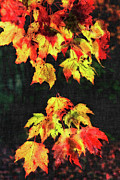 Vivid Fall Colors Framed Prints - Colorful Autumn Leaves III Framed Print by Dan Carmichael