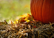 Colorful Autumn Print by Nava Jo Thompson