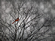 Mikki Cucuzzo - Colorful bird in tree on...