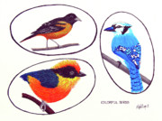 Wildlife Framed Prints Drawings Framed Prints - Colorful Birds Framed Print by Frederic Kohli