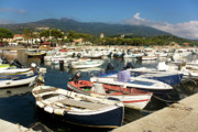 Italy Photos - Colorful Boats In Marina Di Campo Harbor by Corina Daniela Obertas