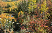 Autumn Scenes Prints - Colorful Canadian Autumn Print by Jim Sauchyn