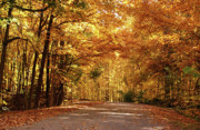 Autumn Trees Prints - Colorful Canopy Print by Sandy Keeton