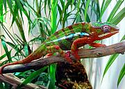 Chameleon Prints - Colorful Chameleon Print by Nancy Mueller