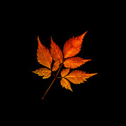 Autumn Leaf Posters - Colorful Change Poster by Julie Palencia