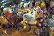 Multi-color Posters - Colorful Christmas Tree Worms, Key Poster by Terry Moore